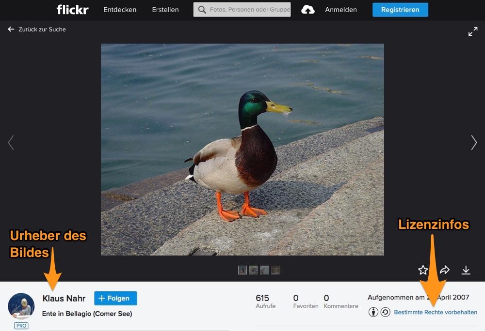 Flickr Bildauswahl: Eine Ente