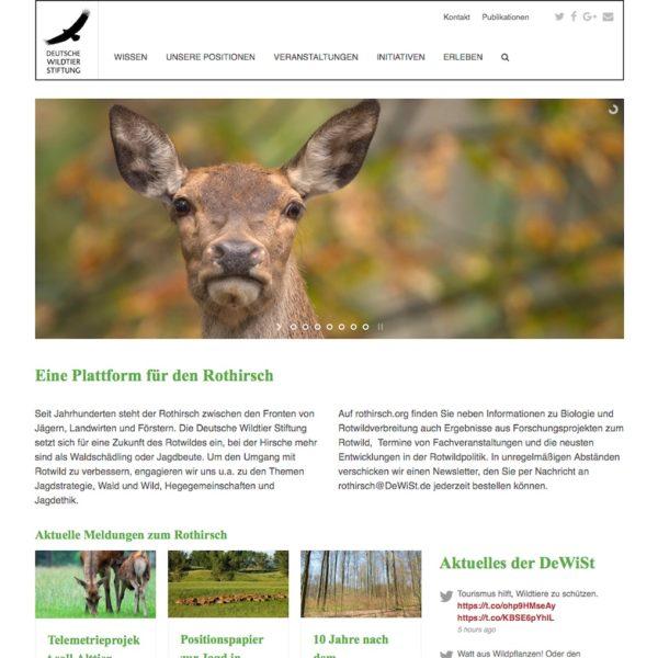 Deutsche Wildtier Stiftung Rothirsch